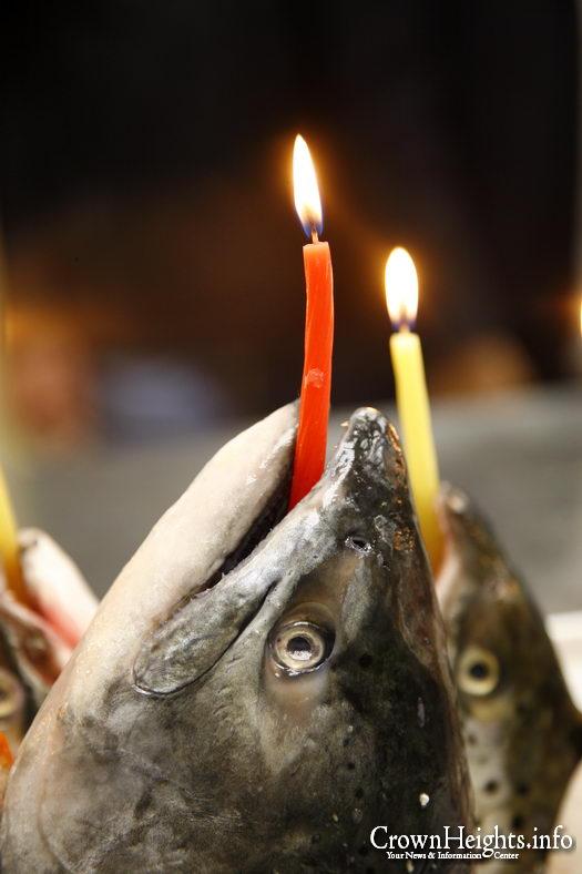 Fish Menorah 3