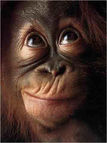 Monkey closeup low res