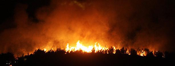 Carmel Wildfire