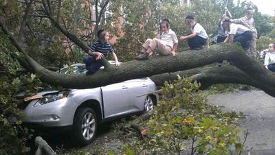 Hasidic kids in Brooklyn sitting on downed tree branch even though police asked people to stay indoors