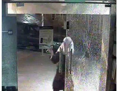 Haredi man breaking window of Or Hachaim bookstore 9-2011