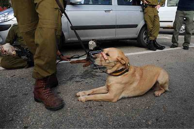 IDF Search and Rescue Dog,jpg
