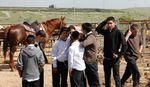ORT yeshiva students in Kfar Zeitim with the yeshiva's horses