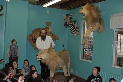 Torah Animal World inside