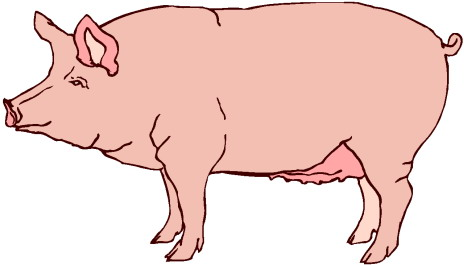 Pig-clipart-gallery