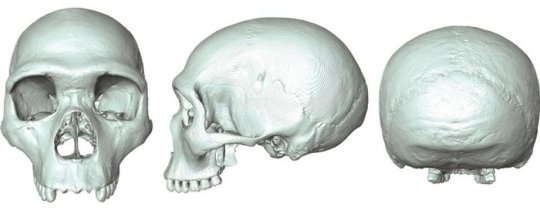 The 'virtual fossil' of last common ancestor of humans and Neanderthals. Credit- Aurélien Mounier, Univerity of Cambridge
