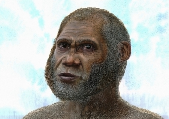 Artist's reconstruction of a Red Deer Cave man. Credit- Peter Schouten University of New South Wales