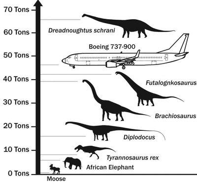 Bird Size Comparison Chart Size Comparison Chart