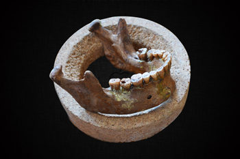 Lower jaw and teeth of Mesolithic hunter-gatherer (Credit- Olivia Cheronet)