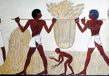 EgyptiansEmmerHarvest1