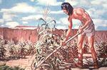 Neolithic farmer