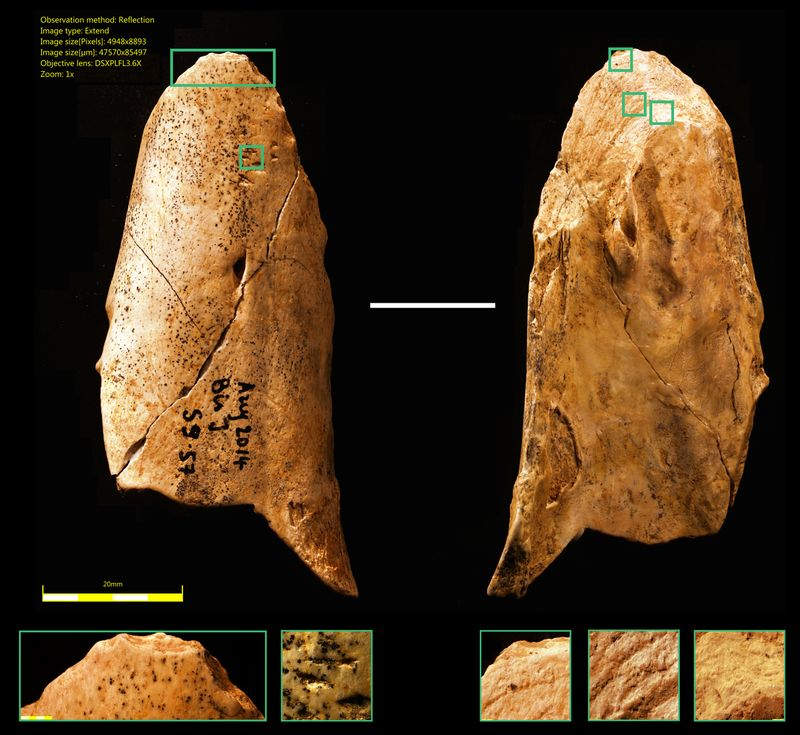 The bone tool discovered by University of Montreal researchers