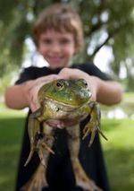 Boy_frog